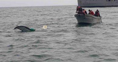 Marina libera a ballena atrapada en San Felipe