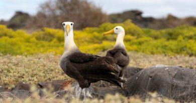 Hoy es el Día Mundial de los Albatros